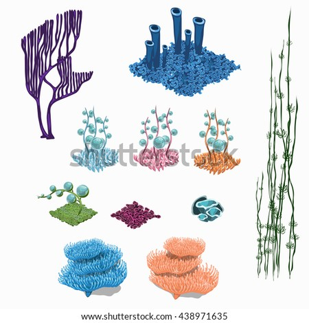 A set of corals, algae and marine polyps isolated on white background. Vector illustration. - stock vector