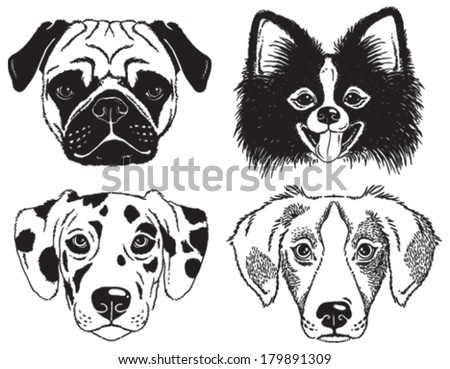 A set of 4 dog's faces: Pug, Chihuahua, Dalmatian and a mutt. Black and white vector sketches. - stock vector