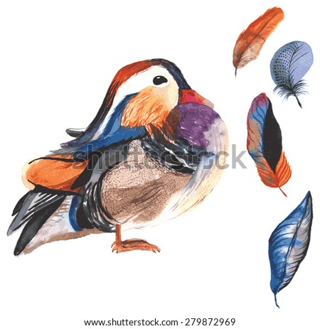 A set of hand-drawn watercolor containing bird Aix galericulata and feathers - stock vector
