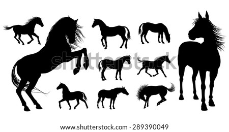 A set of high quality very detailed horses in various poses in silhouette - stock vector
