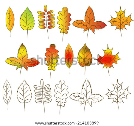 A set of several separate autumn leaves. Leaves of maple, birch, ash, poplar, oak. Color and contour drawn by hand. - stock vector