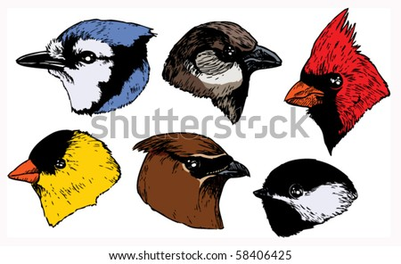 A set of six realistic ink songbird heads in a profile view. Vector. - stock vector