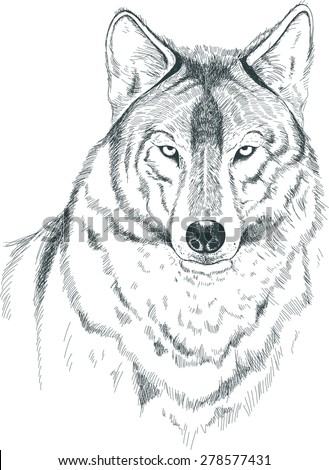 A sketch of a wolf. Handmade. - stock vector