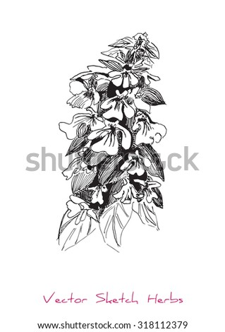 A vector black and white sketch of a herb, initially hand drawn in Chinese ink