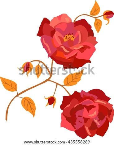 A vintage style drawing of a branch of red roses with blooming flowers, new buds, and golden leaves, on white background; scalable vector graphic; a wedding invitation or birthday card flourish - stock vector
