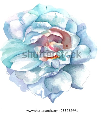 A vintage style watercolour drawing of a white rose, scalable vector graphic - stock vector