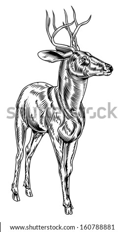 A vintage style woodcut deer illustration of a buck or stag proudly standing and looking into the distance - stock vector
