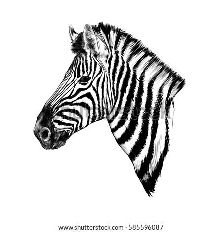Zebra Head Profile Ske...