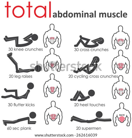 abdominal muscle - stock vector