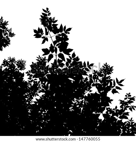 Abstract background with leaves silhouette of American Maple, black and white vector illustration - stock vector