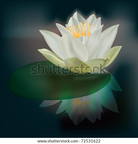 abstract floral illustration with white lotus on dark - stock vector