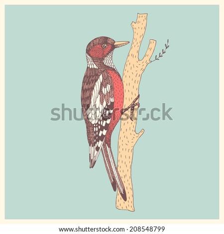 abstract hand drawn bird woodpecker - stock vector