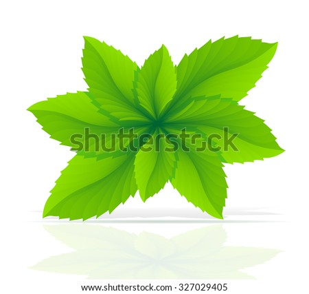 abstract mint leaves vector illustration isolated on white background - stock vector