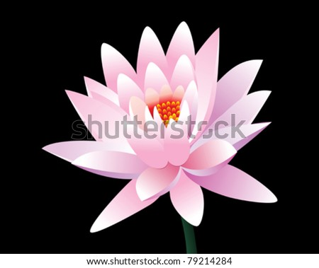 abstract pink lotus flower vector illustration - stock vector