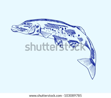 Abstract silhouette of a pike - stock vector