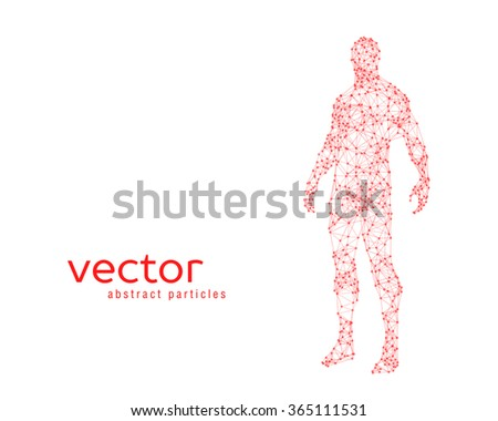 Abstract vector illustration of human body on white background - stock vector