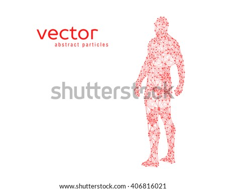 Abstract vector illustration of human body on white background.  - stock vector