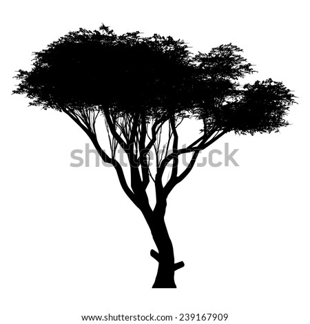acacia silhouette - stock vector