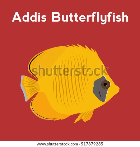Addis Butterflyfish, exotic fish,tropical marine fish