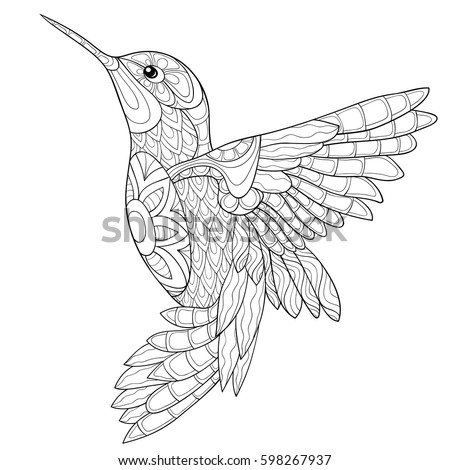 Adult Coloring Book Humming Birdzen Art Style Vector Illustration