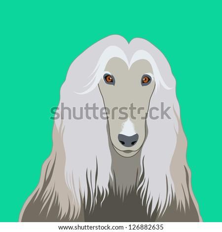 Afghan hound, The buddy dog - stock vector