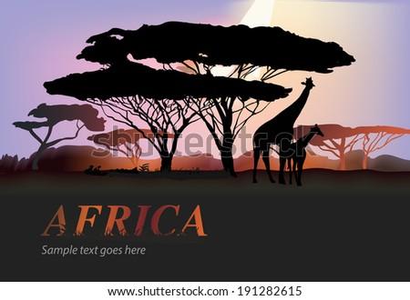 Africa giraffe silhouettes with trees over purple sky, savanna, vector illustration - stock vector