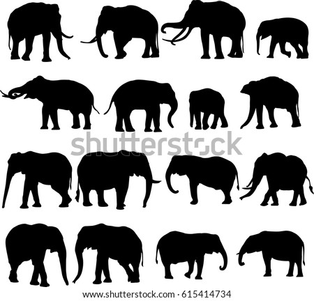 african elephant and asian elephant silhouette contour