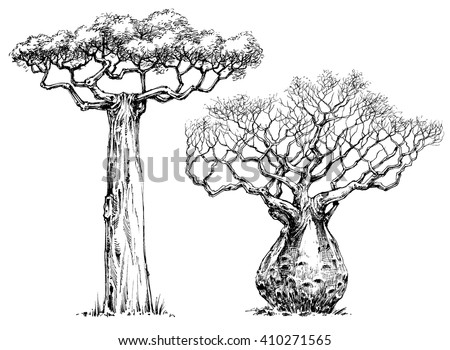 African iconic tree, baobab tree - stock vector