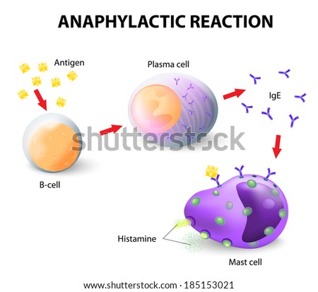 Basophil Stock Images, Royalty-Free Images & Vectors | Shutterstock