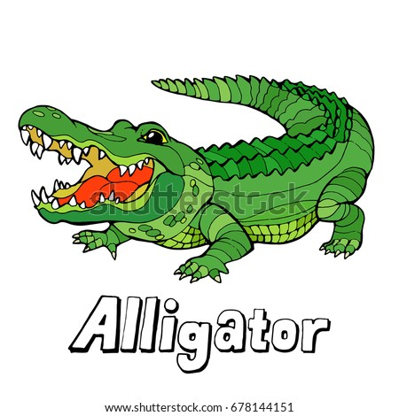 Alligator Picture Stock Images, Royalty-Free Images ... - photo#30
