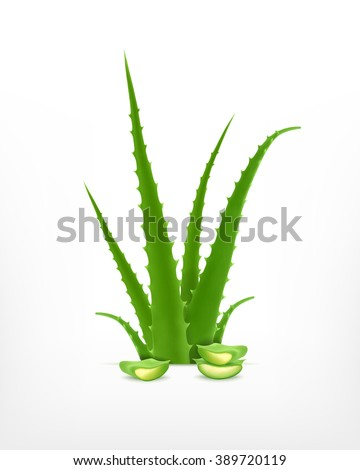 Aloe. Vector icon. EPS10