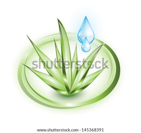 Aloe vera plant with water drops, EPS 10, isolated - stock vector