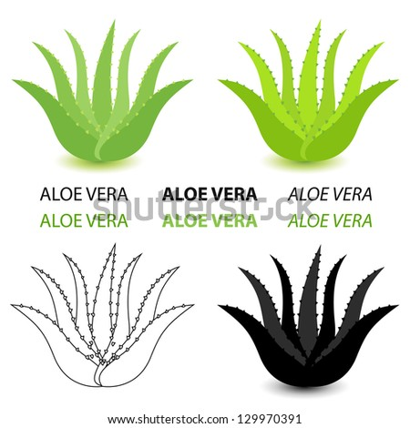 Aloe vera vector set - stock vector