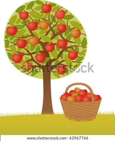 An apple-tree and a basket full of apples. Vector. Tree and basket in other groups. - stock vector