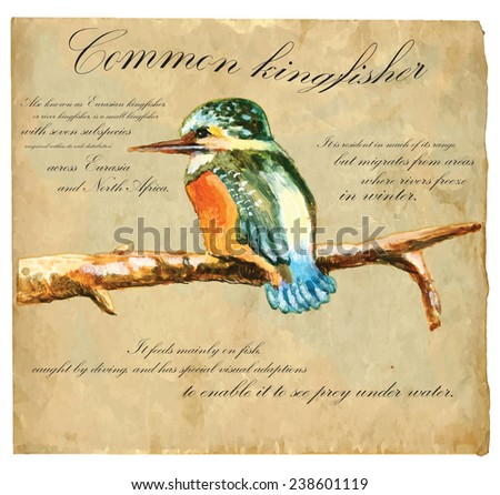 An hand painted illustration into vector picture. Bird: Common Kingfisher - stock vector