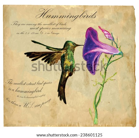 An hand painted illustration into vector picture. Bird: Hummingbird - stock vector