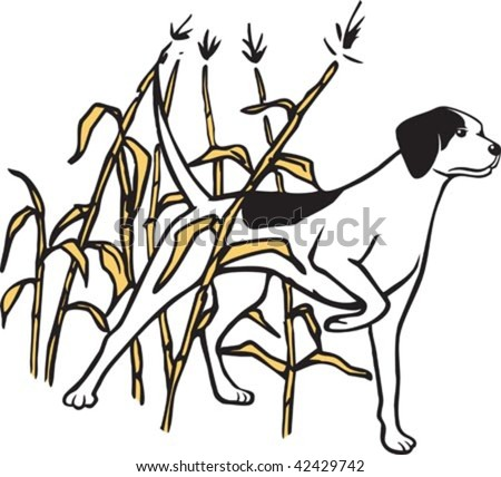 An illustrated hunting dog standing in a field of maze. Layered vector file.