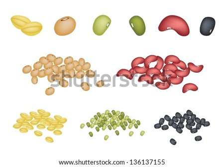 An Illustration Collection of Different Dried Beans, Mung Bean, Kidney Bean, Black Eye Bean, Soy Bean and Yellow Split Peas - stock vector