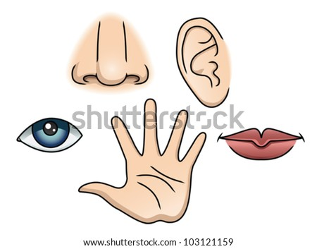 An Illustration depicting the 5 senses. Eps 10 Vector. - stock vector