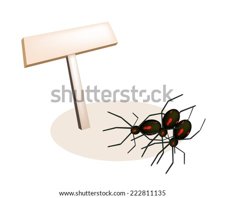 An Illustration of Empty Wooden Sign Board with Black Terrible Halloween Spiders Isolated on White Background, For Halloween Celebration.