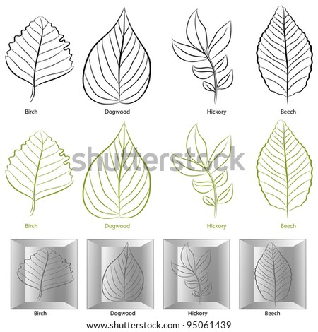 An image of a set of birch, dogwood, hickory and birch tree leaf types. - stock vector