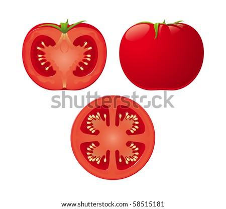 An isolated vector tomato and two halves - stock vector