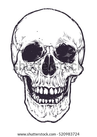 Anatomic Skull Vector Art Detailed Handdrawn Stock Vector