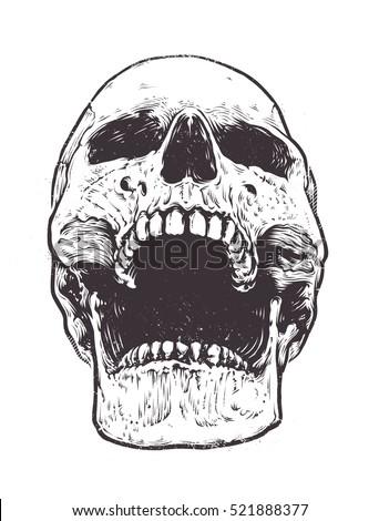 Anatomic Skull Vector Art Detailed Handdrawn 521888377