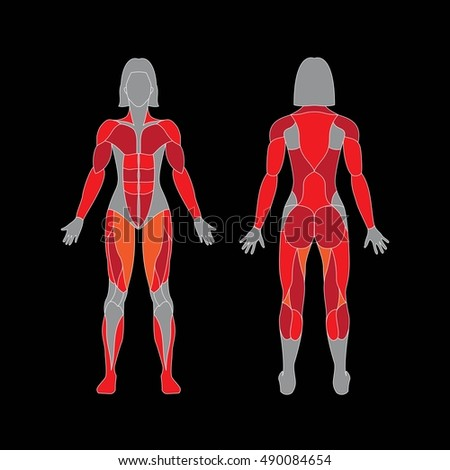 Anatomy Female Muscular System On Black Stock Vector 490084654