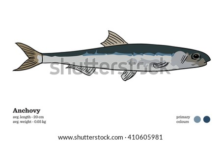 Anchovy fish vector illustration