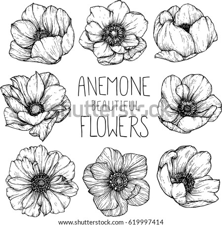 Anemone flowers drawing illustration vector clipart stock vector anemone flowers drawing illustration vector and clip art mightylinksfo