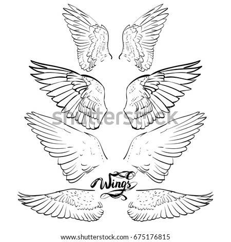 angel wings, lettering, drawing vector