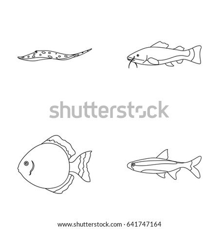 angelfish common barbus neon fish set collection stock vector