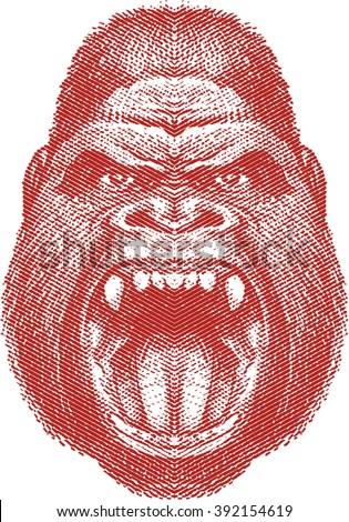 Angry gorilla face - stock vector